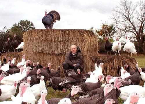 Free Range Christmas Turkeys Yorkshire